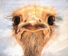ostrich by MiracleAyano on deviantART
