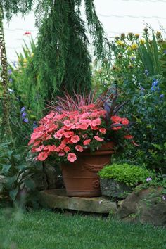 Coral petunias & several red leafed plants #containergardenideas