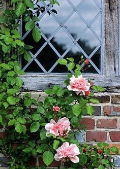 Brabourne Farm: Window to the World