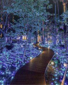 See . 32 Fascinating Photos Filled with Awesomeness that Show How Fun, Finds Holiday Lights, Christmas Lights, Fantasy Landscape, Landscape Design, Awsome Pictures, Fantasy Forest, Beautiful Places To Visit, Nature Pictures, Installation Art