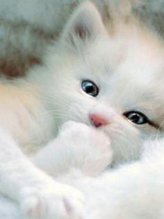 White kitty love too cute too too cute