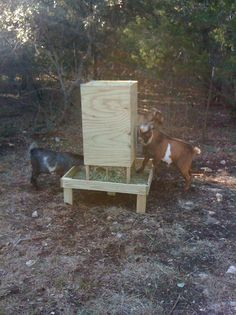 square bale feeder for goats. I like this. It will keep the hay from getting ruined.