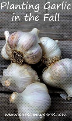 Planting Garlic in the Fall in your backyard garden Planting Garlic in the Fall in your backyard gaYou can find Planting. Planting Garlic In Fall, Backyard, Canning, Vegetables, Garden, Plants, Patio, Home Canning, Veggies