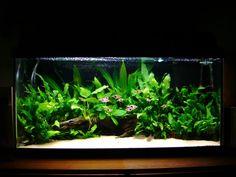 Pruning your aquarium plants