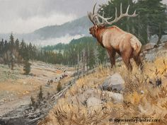 TR IN SEARCH OF ELK   Not Just Wildlife Art of John & Suzie Seerey-Lester