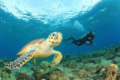 The Bucket List: 5 Reasons Why I Must Go To Puerto Rico -- diving with sea turtles  #SummerInspiration #ad