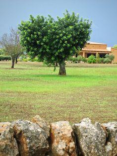 heart-shaped tree
