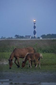 Cape Lookout National Seashore, Harkers Island Picture: A mare and her foal on Shackelford Banks with Cape Lookout lighthouse on Core banks behind. - Check out Tripadvisor members' 769 candid photos and videos of Cape Lookout National Seashore Nc Lighthouses, North Carolina Lighthouses, North Carolina Beaches, North Carolina Homes, Carteret County, Island Pictures, Atlantic Beach, East Coast, Trip Advisor