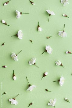 Blossom background by Ruth Black - Flower, Blossom - Stocksy United Ps Wallpaper, Pastel Wallpaper, Cute Wallpaper Backgrounds, Flower Backgrounds, Flower Wallpaper, Cute Wallpapers, Black Backgrounds, Green Wallpaper Phone, Large Indoor Plants