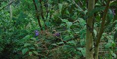 Nature Pictures, Birds, Flowers, Plants, Bird, Plant, Royal Icing Flowers, Flower, Florals