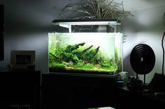 Roots of life par Strato. #aquascaping #aquarium #fishtank