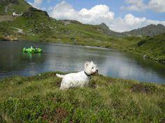 Wandern mit Hund in Salzburg, in der Lungauer Bergwelt in den Ferien  Eingezäunter Garten, Begrüßungsleckerli, Baden mit Hund, Dog-Sitting; Hunde urlauben gratis!   Schmankerlküche, Wellnessoase und Skivergnügen in der Skiregion Obertauern! Im Sommer herrliche Wanderregion!  #hundefreundlich #hotel #urlaubmithund #hund #ferienmithund #salzburg #lungau #urlaub #oesterreich #salzburgerland #hotelmithund #dogswelcome #dogs #wandern #wandernmithund #dog #badenmithund #sommerurlaub