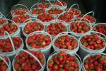 The Strawberry Ranch Maze Maze, Ranch, Salsa, Strawberry, Mexican, Fresh, Vegetables, Ethnic Recipes, Food