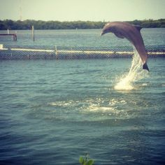 If I could be any animal, it would be a dolphin. They get to spend their entire lives swimming in the beautiful ocean!