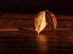 20 Very Beautiful Images For Fall Desktop Background Images, New Backgrounds, Very Beautiful Images, Beautiful Artwork, Morning Meditation, Moving To California, Victor Hugo, Best Places To Travel, Haiku