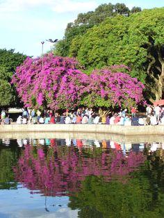 Parque da Redenção, Porto Alegre, RS, Brazil