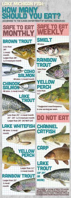 Lake Michigan Fish s