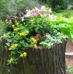 a tree stump plant up with flowers - Even a low stump can be chiselled out with an axe to create the perfect place to pot of a colourful arrangements of plants. - See more at: http://www.home-dzine.co.za/garden/garden-tree-stump.htm#sthash.vdOX9d9X.dpuf