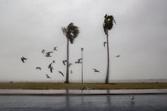 Hurricane Harvey in Photographs