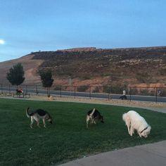 It's a sniffing party at City of Washington Dogtown Park! - Washington, UT - Angus Off-Leash #dogs #puppies #cutedogs #washington #utah #dogparks #angusoffleash #bigdogs