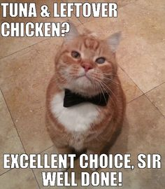 cat, cats, hilarious, meow, cat memes, fancy cat, butler cat
