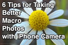 6 Tips for Taking Better Macro Photos with the iPhone Camera