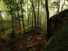 gibts hier: Misty Forest Stock Package