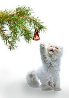 Holiday cuteness
