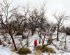 Ofer Wolberger, Winter Landscape, Lebec, CA