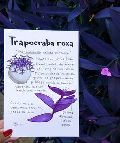 Bianca Nazari on Behance Exotic Plants, Exotic Flowers, Inside Garden, Vintage Garden Decor, Growing Plants Indoors, Plant Guide, Plants Are Friends, Nature Journal, Natural Garden