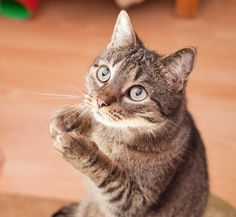 #6 – Fetch To teach your cat to fetch, first find out what your cat's favorite toy is and make sure to use that. Fetch can be taught a number of ways, but the easiest way is to throw the toy and gently take it from them, only to throw it again. Eventually, most …
