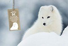 Save the arctic fox Save The Arctic, Arctic Fox, Outdoor Outfit, Polar Bear, Trekking, Husky, Seasons, Activities, Dogs