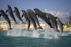 Cozumel, Mexico. Swam with the dolphins