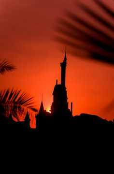 Lots of sunrise and New Fantasyland photos from the 24-hour party at Walt Disney World in this trip report!