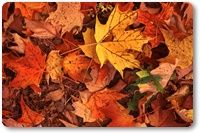 Add Falling Leaves Effect To Blogger Blog