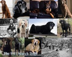 A Tribute to ALL of the 9/11 Hero Dogs...    ~9/11 Hero Dogs~ from For the Love of the Dog on FB