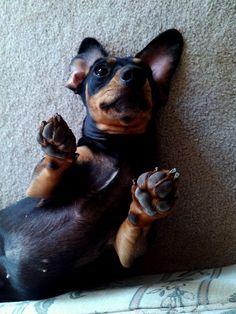 More tummy rubs, please!