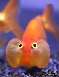 Prednisone Face Fish