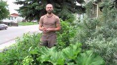 Verge Permaculture Videos