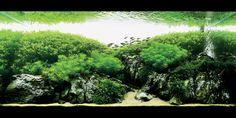 Takashi amano Aquarium nature