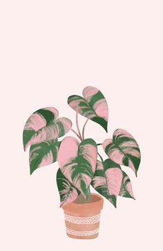 Pink Princess Philodendron Art Print by Katja Perez - X-Small Plant Painting, Plant Art, Plant Decor, Plant Wallpaper, Flower Wallpaper, Pink Plant, Tropical Art, Cactus Art, Plant Illustration