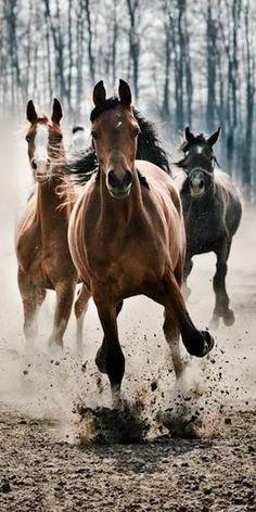 Let them run free