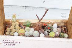 cactus サボテン寄せ植え