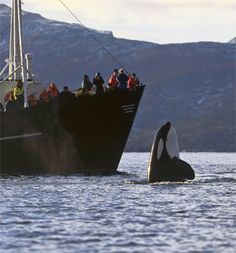 I want to go whale watching, again.