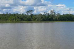 Floresta Amazônica - Espigão do Oeste, Rondônia.