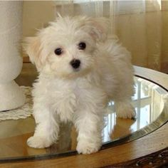 o-m-g so freaking cute! I want one!!