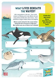 Home Learning for Kids Home Learning, Fun Learning, Activity Sheets For Kids, Animal Habitats, Home Activities, Marine Biology, Coral Reefs, Weird And Wonderful