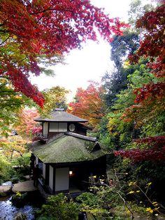 Autumn colours in Sankeien Garden, Yokohama, Japan (by hamapenguin) http://www.flickr.com/photos/hamapenguin/