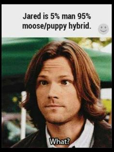 Sam is human and moose/puppy Castiel, Supernatural Hair, Supernatural Bloopers, Supernatural Imagines, Supernatural Wallpaper, Supernatural Memes Tumblr, Spn Memes, Jensen Ackles, Jared And Jensen