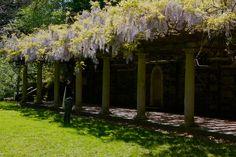 curtis arboretum – Joe Plus Dar Curtis Hall, Budget Wedding, Google Search, Plants, Wedding Budgeting, Plant, Planets